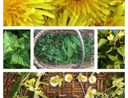 Spring Herb Workshop – 2021 – date TBC