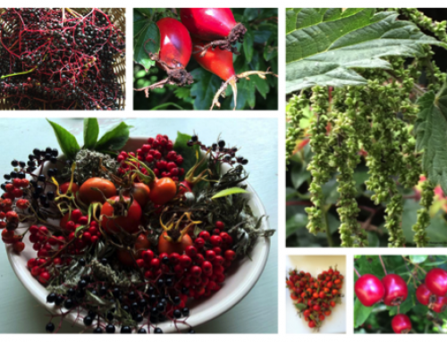 Autumn Herb Workshop – 2019